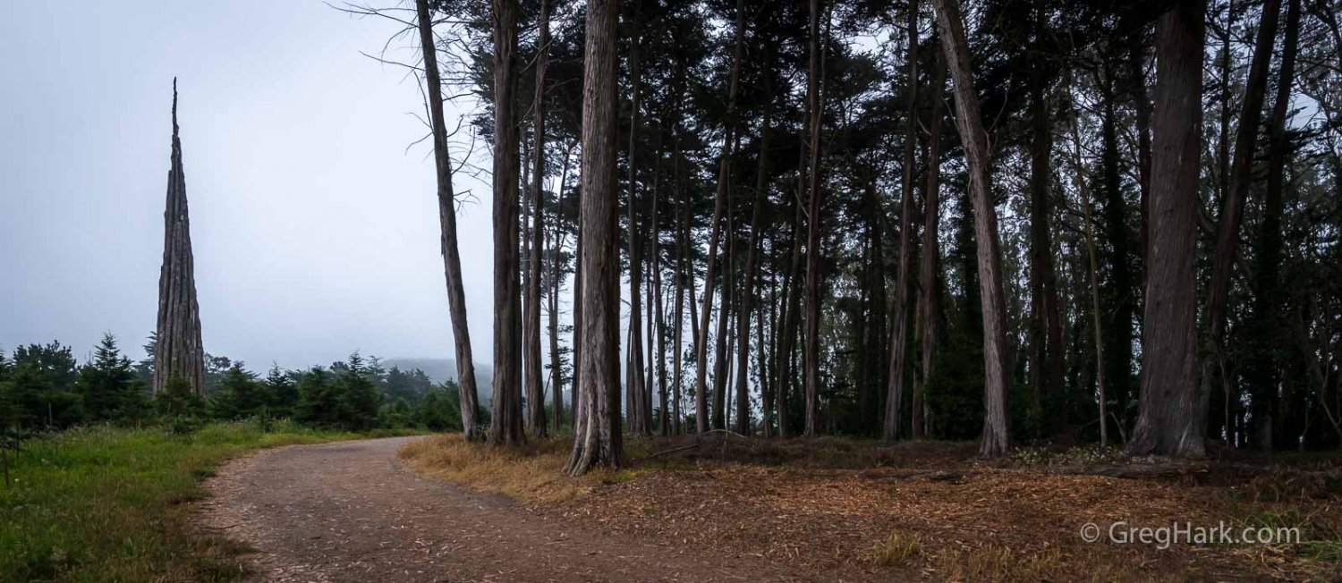Presidio Forest of San Francisco, California