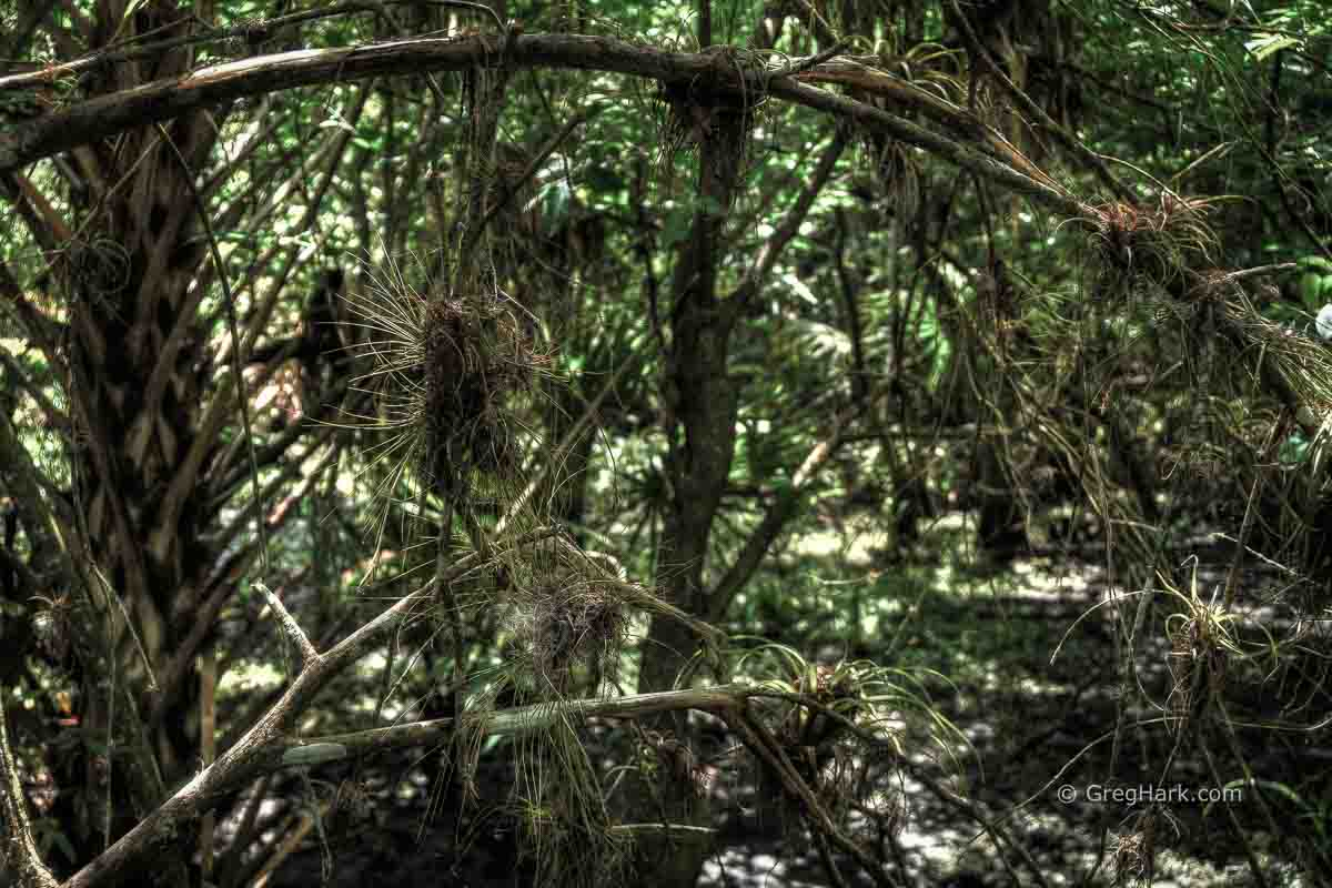 Fern Forest, Broward Country, Florida 2017 Cypress,Fern,FernForest Nature Center Alantic Blvd,